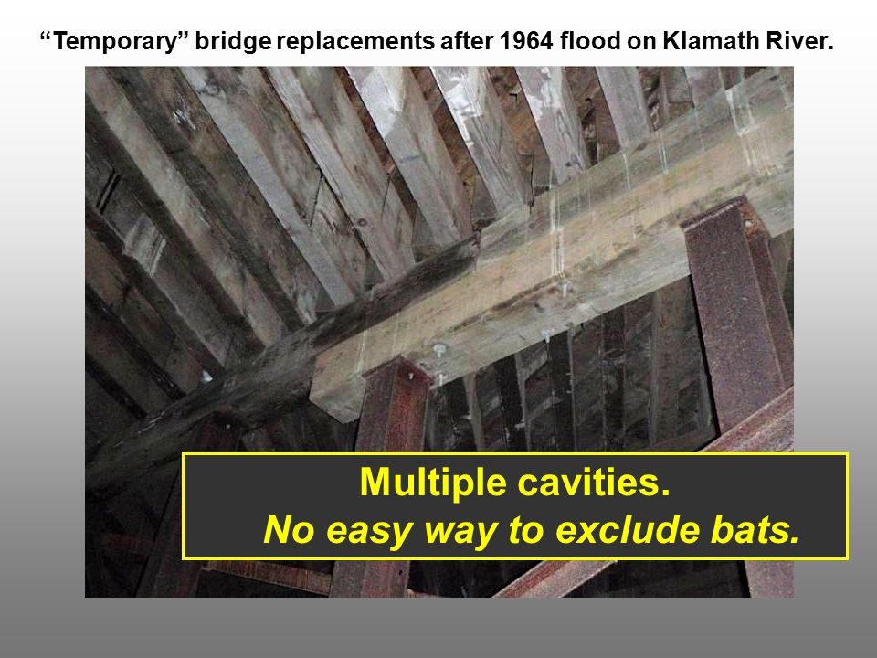 """""""Temporary"""" bridge replacements after 1964 flood on Klamath River. Multiple cavities. No easy way to exclude bats."""