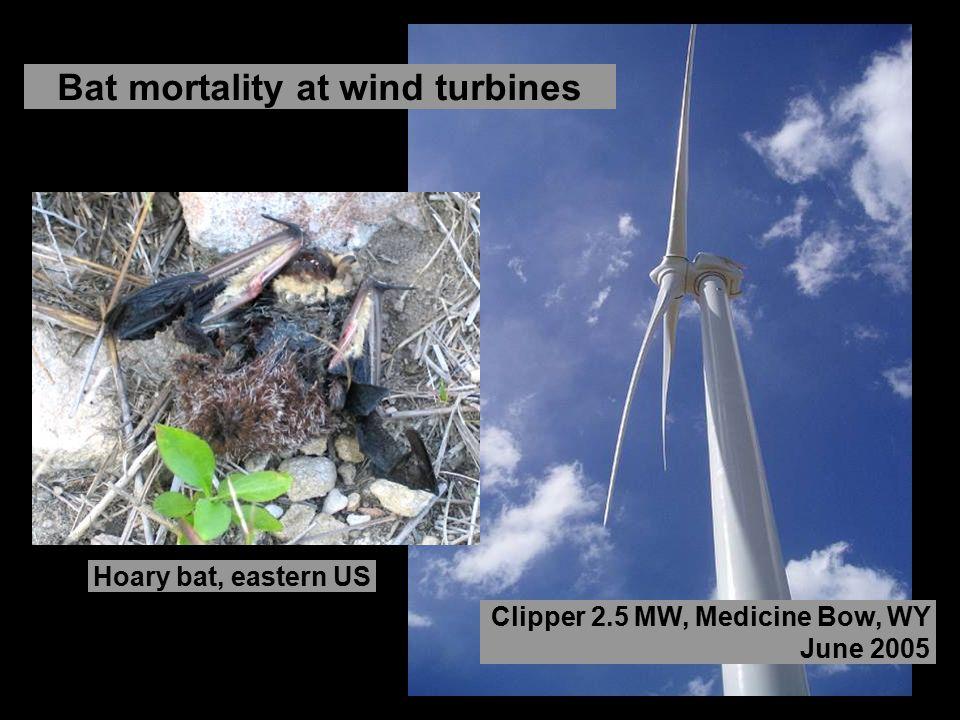 Clipper 2.5 MW, Medicine Bow, WY June 2005 Bat mortality at wind turbines Hoary bat, eastern US
