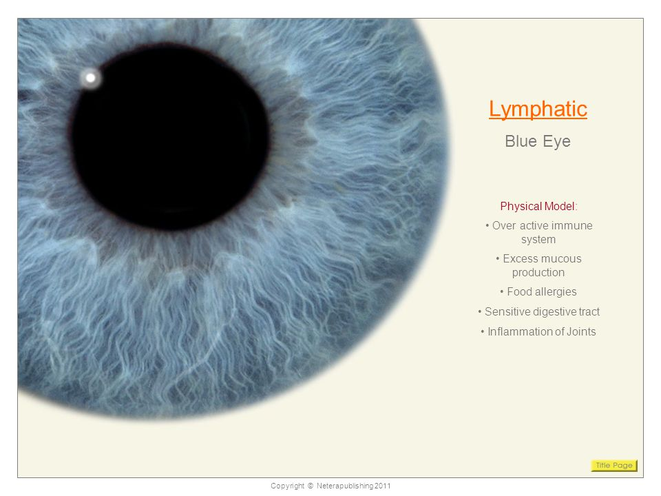 Copyright © Neterapublishing 2011 Lymphatic Blue Eye Physical Model: Over active immune system Excess mucous production Food allergies Sensitive digestive tract Inflammation of Joints