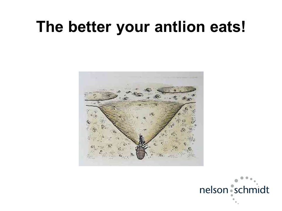 The better your antlion eats!