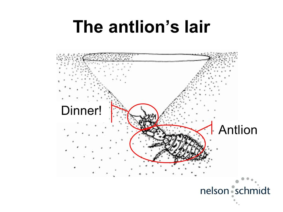 The antlion's lair AntlionDinner!