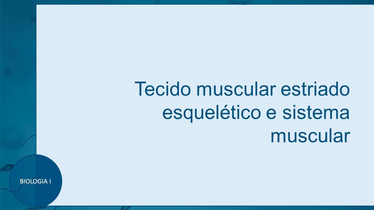 Tecido muscular estriado esquelético e sistema muscular