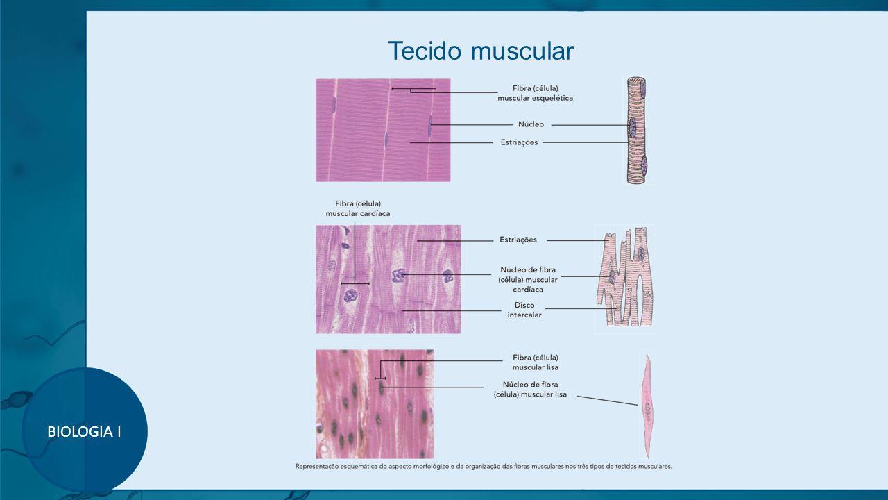 Tecido muscular BIOLOGIA I