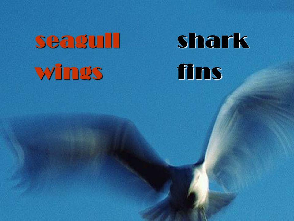 seagullwingssharkfins