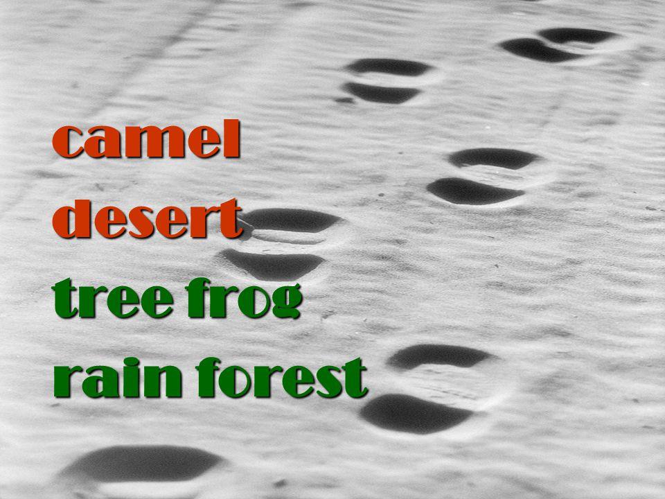 camel desert tree frog rain forest