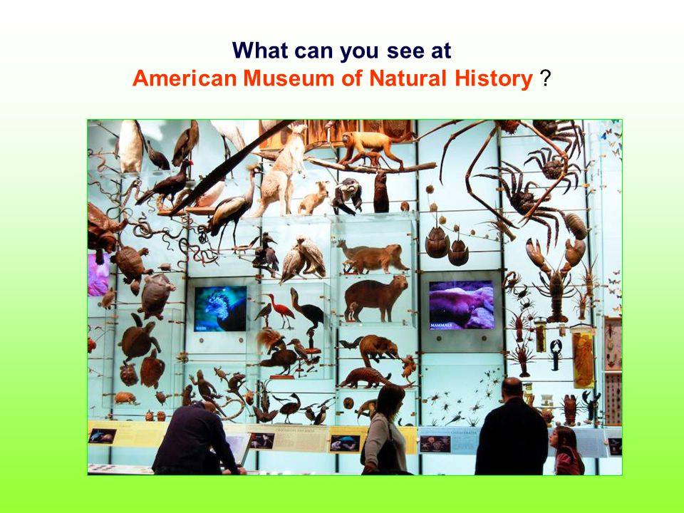 What can you see at American Museum of Natural History ?