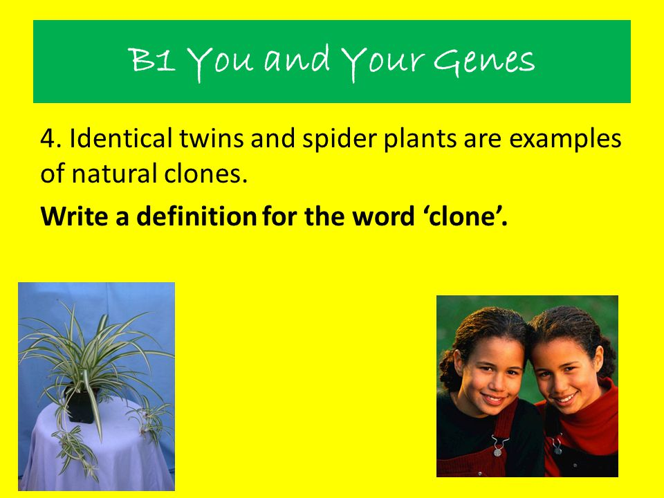 B1 You and Your Genes 4. Identical twins and spider plants are examples of natural clones. Write a definition for the word 'clone'.