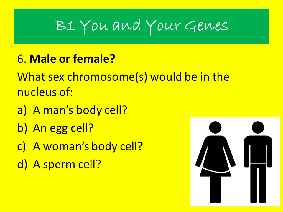 B1 You and Your Genes 6. Male or female? What sex chromosome(s) would be in the nucleus of: a)A man's body cell? b)An egg cell? c)A woman's body cell?