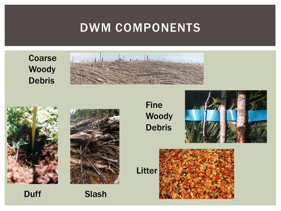 DWM COMPONENTS Coarse Woody Debris DuffSlash Fine Woody Debris Litter
