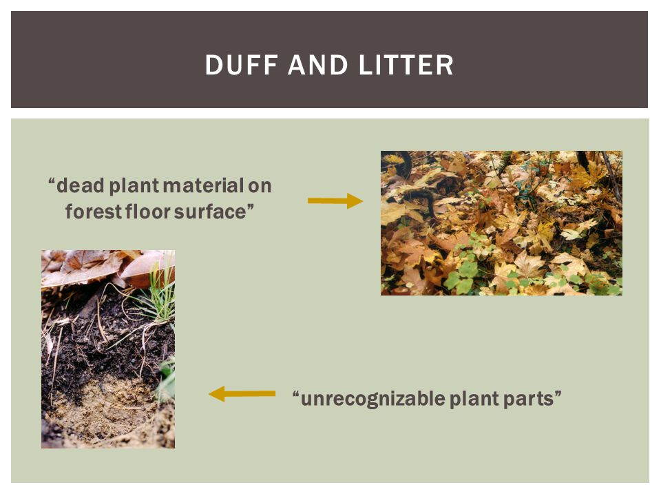 DUFF AND LITTER unrecognizable plant parts dead plant material on forest floor surface