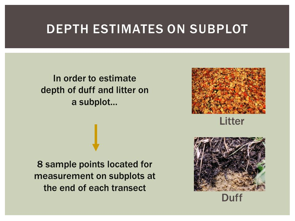 DEPTH ESTIMATES ON SUBPLOT Duff Litter In order to estimate depth of duff and litter on a subplot… 8 sample points located for measurement on subplots at the end of each transect