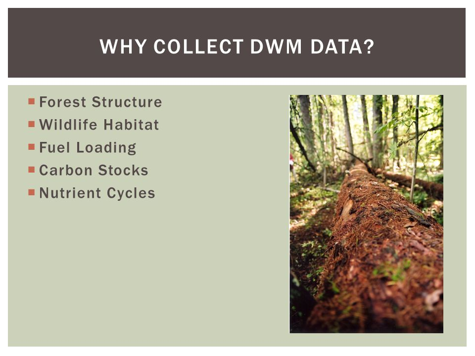  Forest Structure  Wildlife Habitat  Fuel Loading  Carbon Stocks  Nutrient Cycles WHY COLLECT DWM DATA