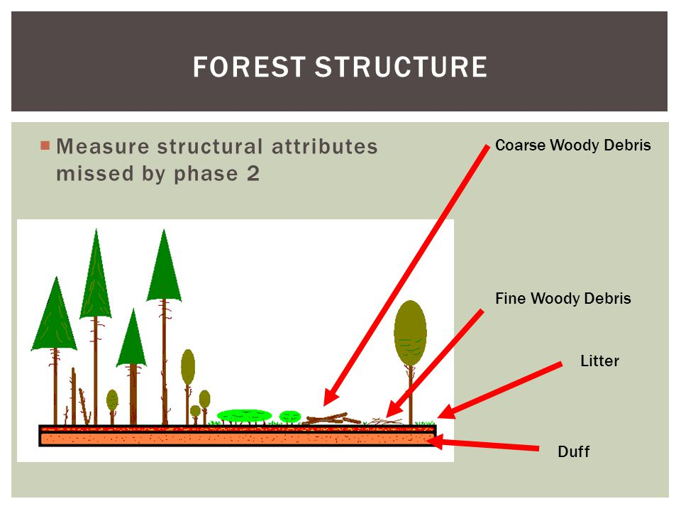  Measure structural attributes missed by phase 2 FOREST STRUCTURE Coarse Woody Debris Fine Woody Debris Litter Duff