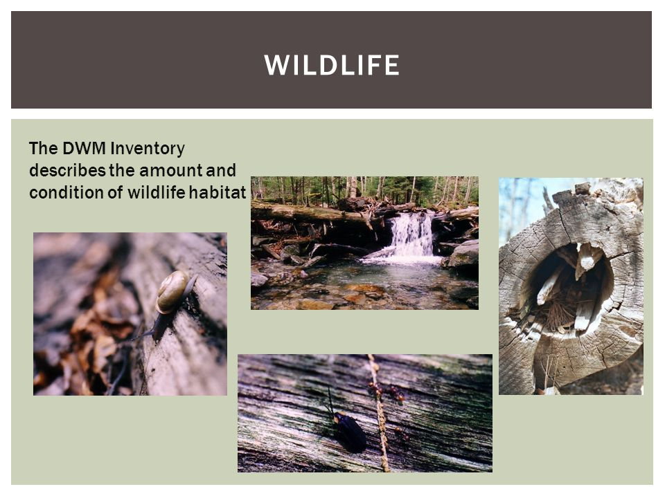 WILDLIFE The DWM Inventory describes the amount and condition of wildlife habitat