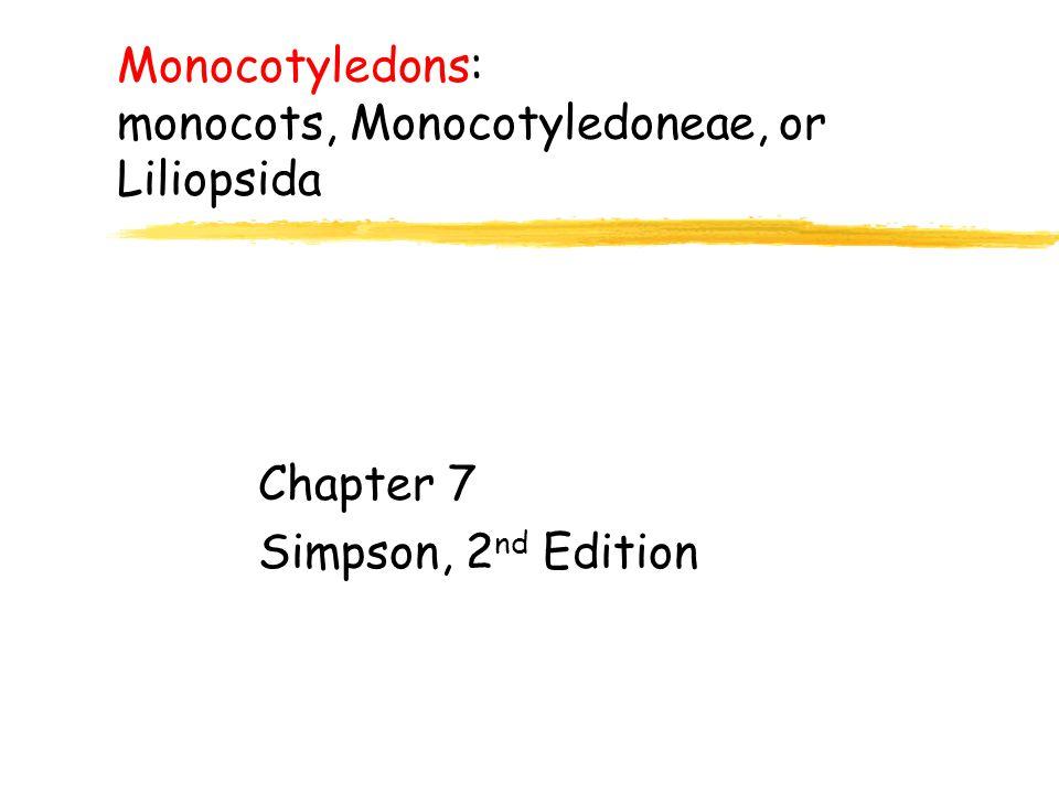 Monocotyledons: monocots, Monocotyledoneae, or Liliopsida Chapter 7 Simpson, 2 nd Edition