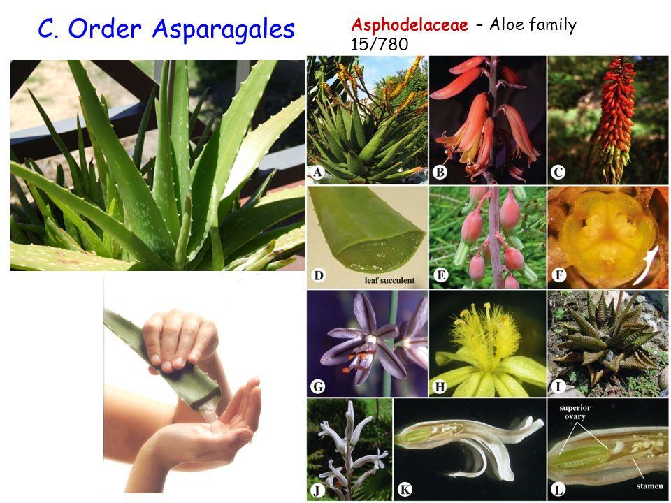 C. Order Asparagales Asphodelaceae – Aloe family 15/780
