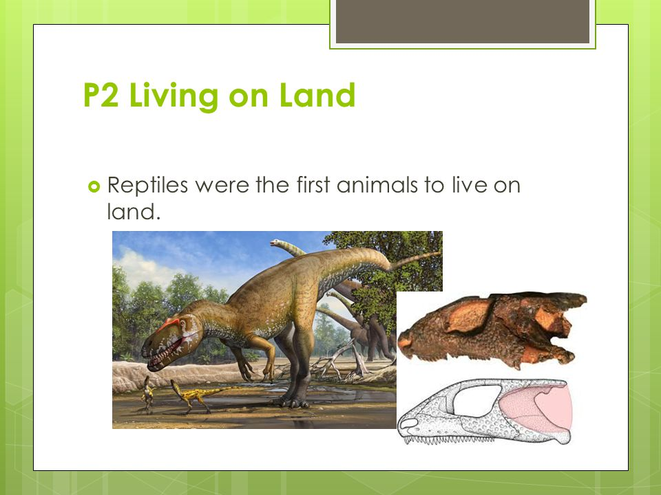 P2 Living on Land  Reptiles were the first animals to live on land.