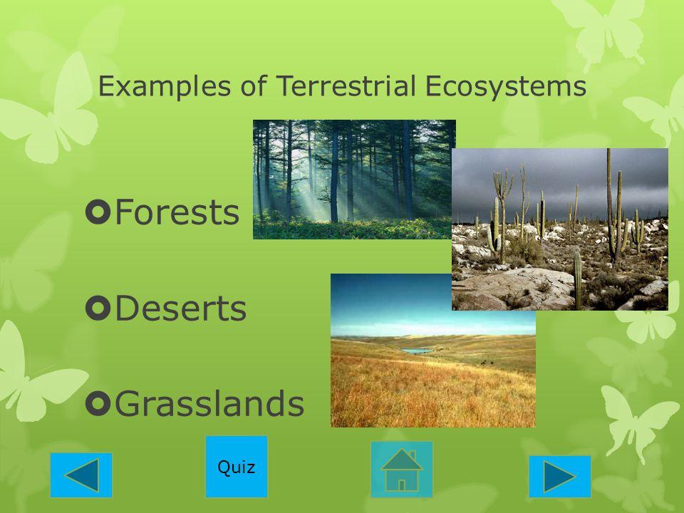 Examples of Terrestrial Ecosystems  Forests  Deserts  Grasslands Quiz