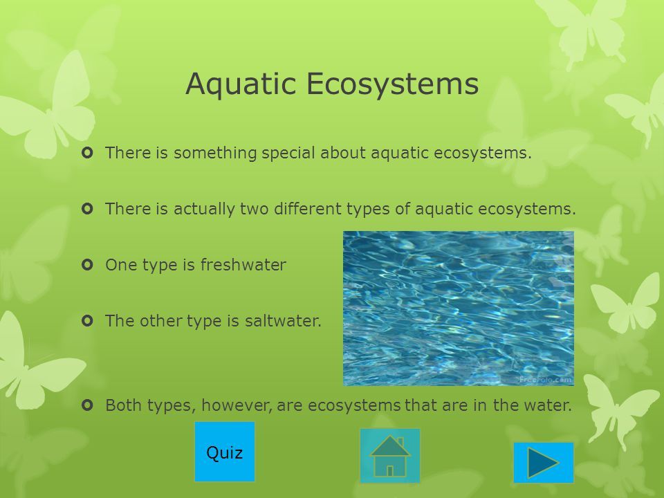 Aquatic Ecosystems  There is something special about aquatic ecosystems.  There is actually two different types of aquatic ecosystems.  One type is