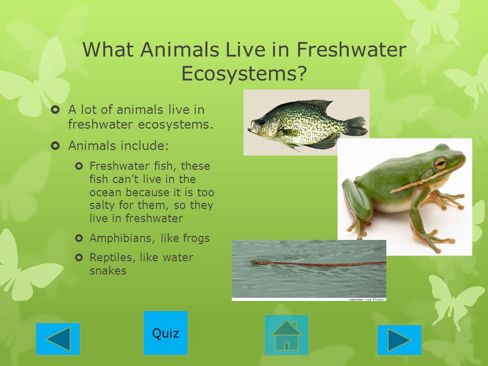 What Animals Live in Freshwater Ecosystems?  A lot of animals live in freshwater ecosystems.  Animals include:  Freshwater fish, these fish can't l