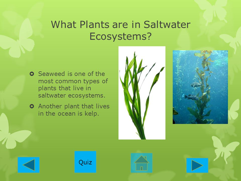 What Plants are in Saltwater Ecosystems?  Seaweed is one of the most common types of plants that live in saltwater ecosystems.  Another plant that l