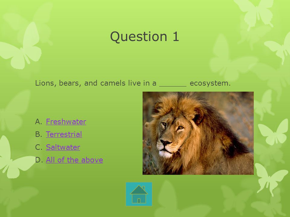 Question 1 Lions, bears, and camels live in a ______ ecosystem. A.FreshwaterFreshwater B.TerrestrialTerrestrial C.SaltwaterSaltwater D.All of the abov