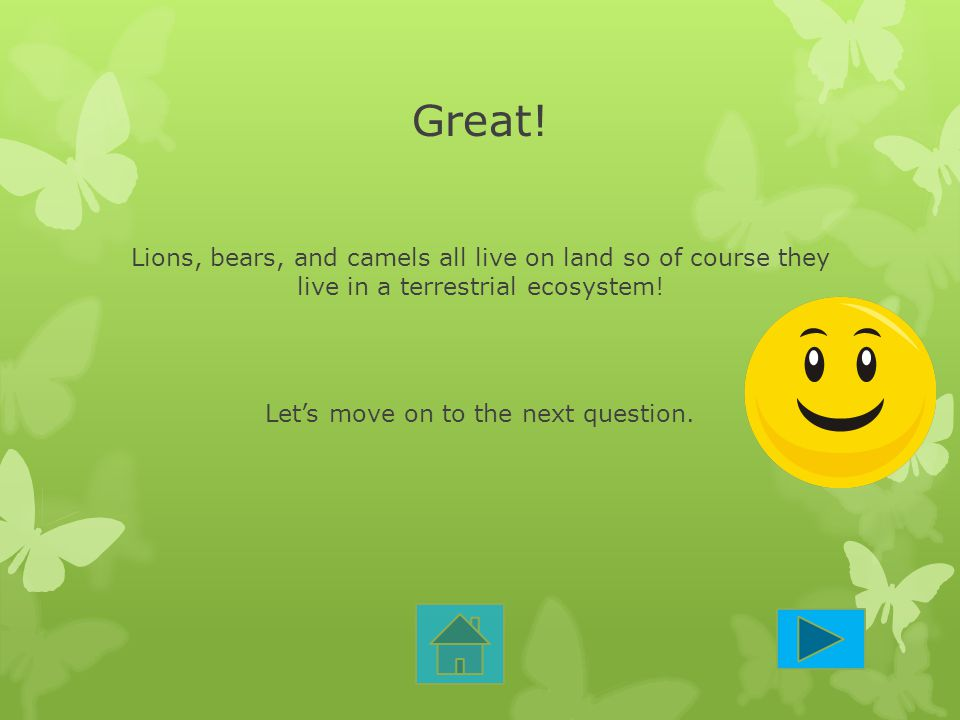 Great! Lions, bears, and camels all live on land so of course they live in a terrestrial ecosystem! Let's move on to the next question.