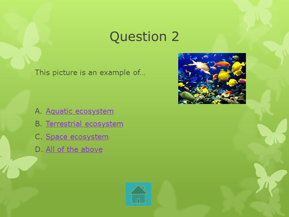 Question 2 This picture is an example of… A.Aquatic ecosystemAquatic ecosystem B.Terrestrial ecosystemTerrestrial ecosystem C.Space ecosystemSpace eco