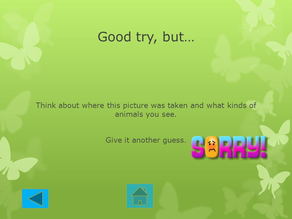 Good try, but… Think about where this picture was taken and what kinds of animals you see. Give it another guess.