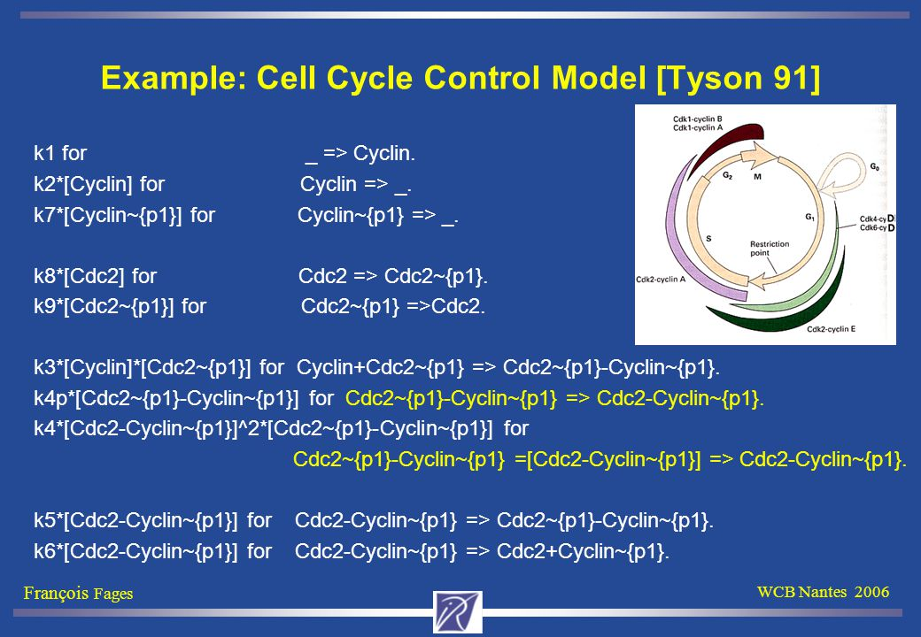 François Fages WCB Nantes 2006 Example: Cell Cycle Control Model [Tyson 91] k1 for _ => Cyclin.