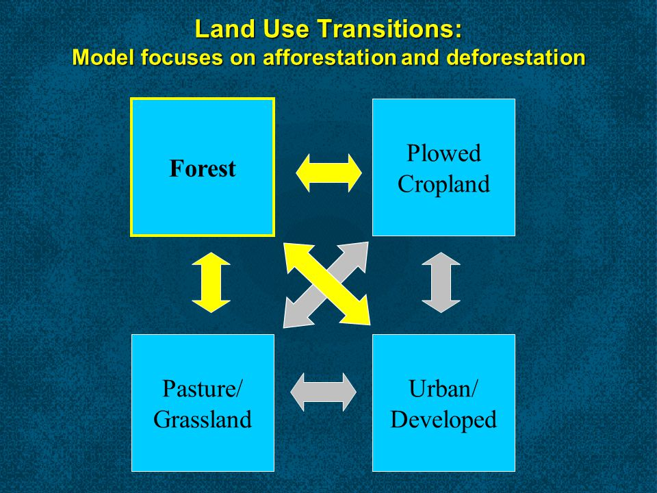 Forest Carbon Pools Down dead wood Understory Live trees Standing dead trees Soil organic carbon (to 1 m) Forest floor