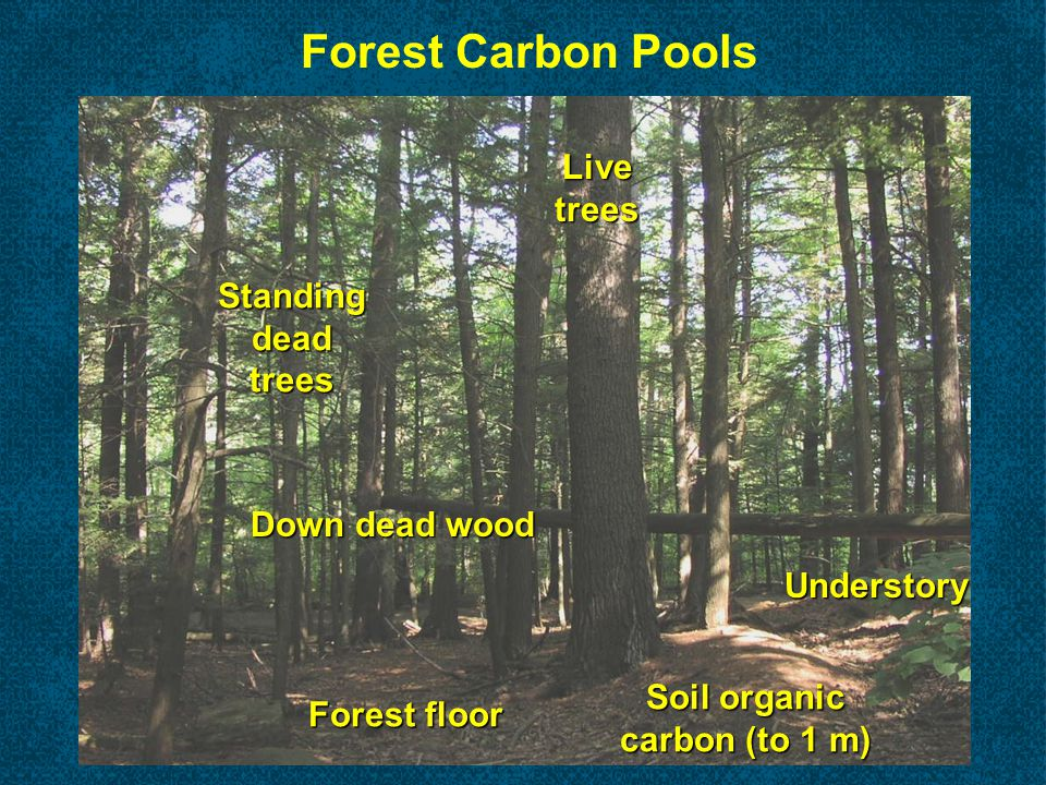 Change in Soil Carbon with Deforestation
