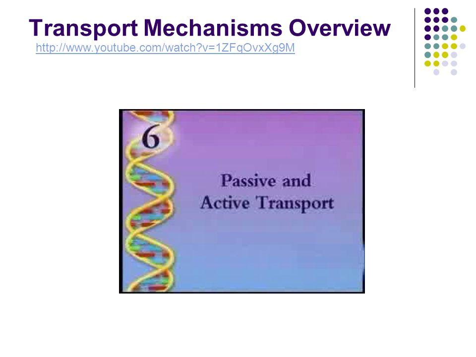 Transport Mechanisms Overview http://www.youtube.com/watch v=1ZFqOvxXg9M