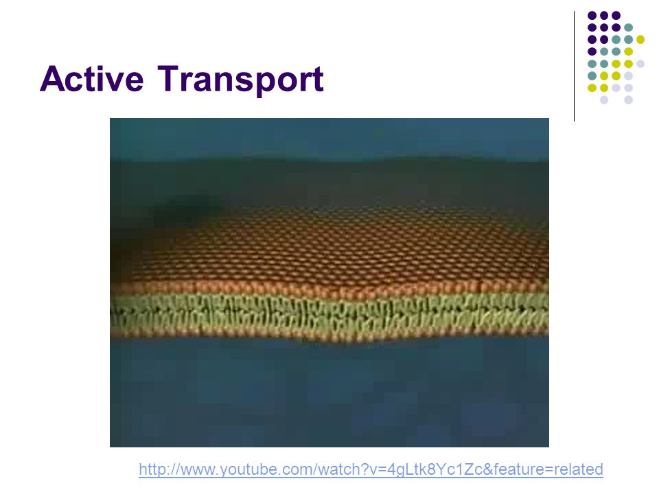 Active Transport http://www.youtube.com/watch v=4gLtk8Yc1Zc&feature=related
