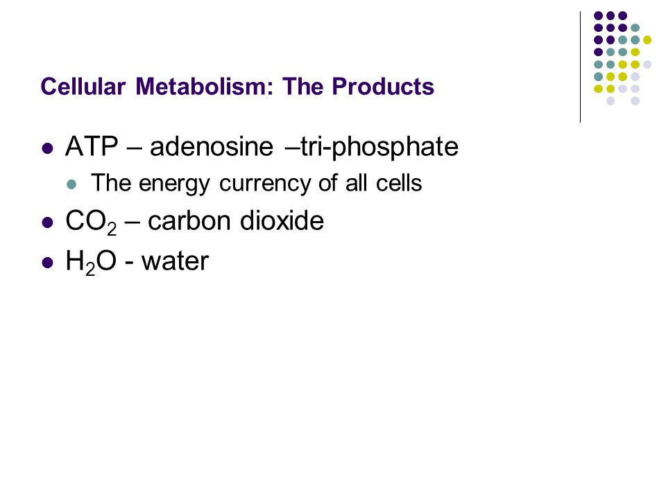 Cellular Metabolism: The Products ATP – adenosine –tri-phosphate The energy currency of all cells CO 2 – carbon dioxide H 2 O - water