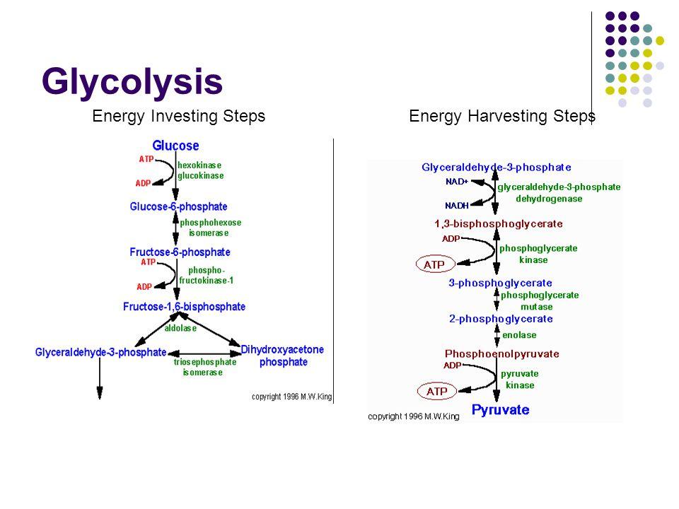 Glycolysis Energy Investing StepsEnergy Harvesting Steps