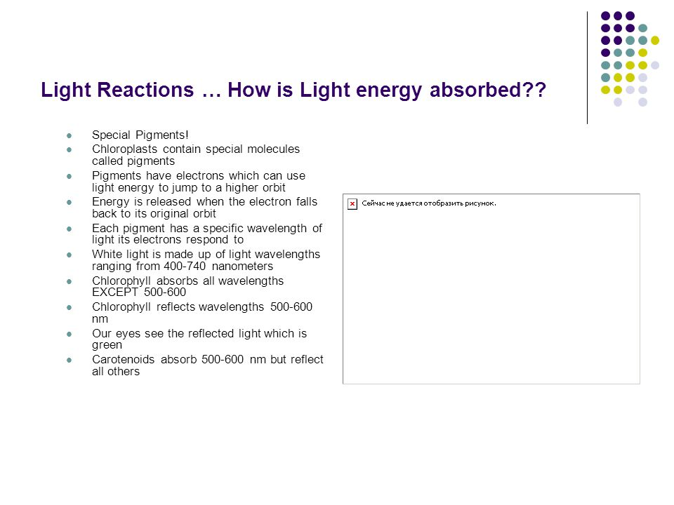 Light Reactions … How is Light energy absorbed . Special Pigments.