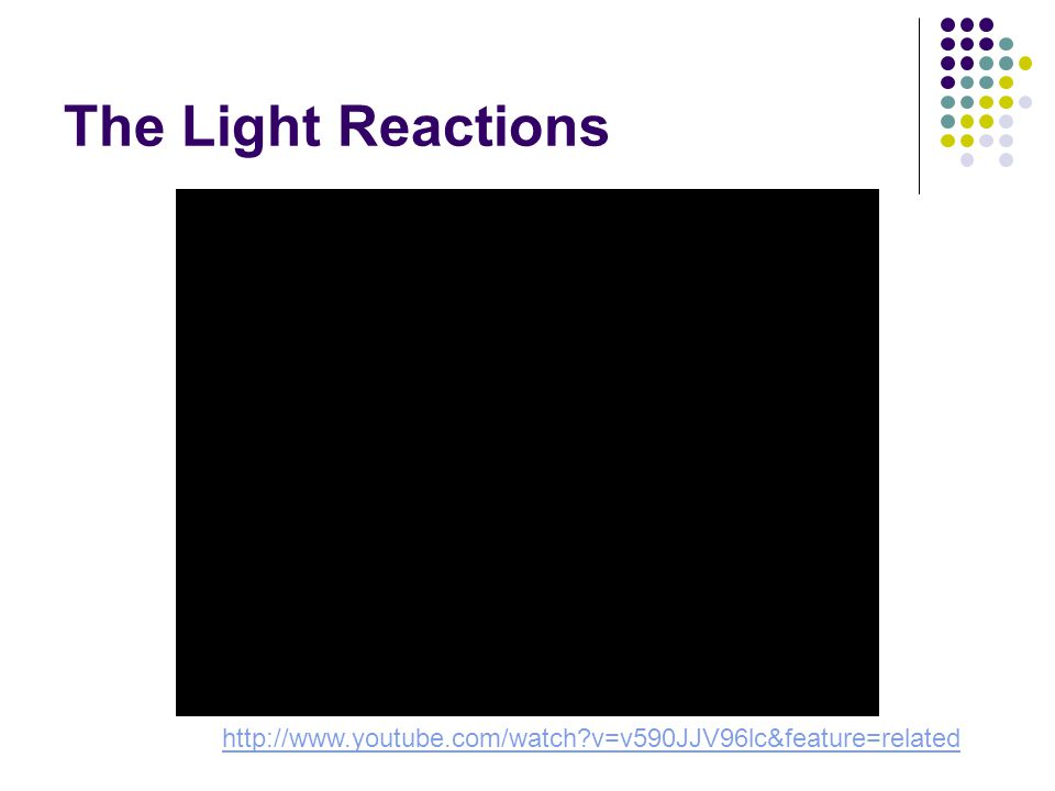 The Light Reactions http://www.youtube.com/watch v=v590JJV96lc&feature=related