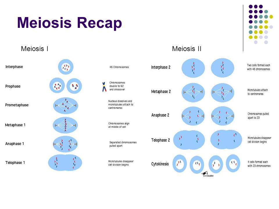 Meiosis Recap Meiosis IMeiosis II