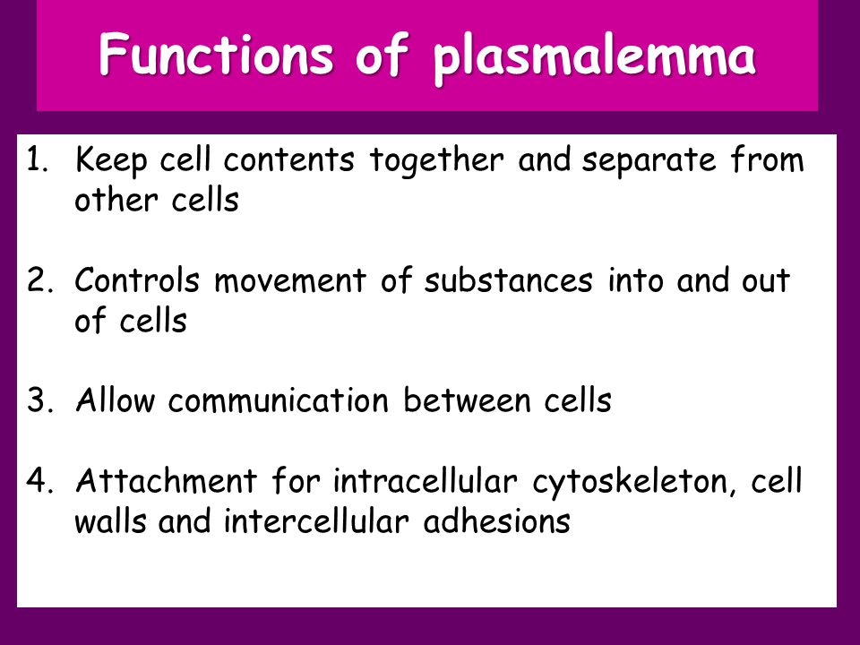 Functions of plasmalemma 1.Keep cell contents together and separate from other cells 2.Controls movement of substances into and out of cells 3.Allow communication between cells 4.Attachment for intracellular cytoskeleton, cell walls and intercellular adhesions