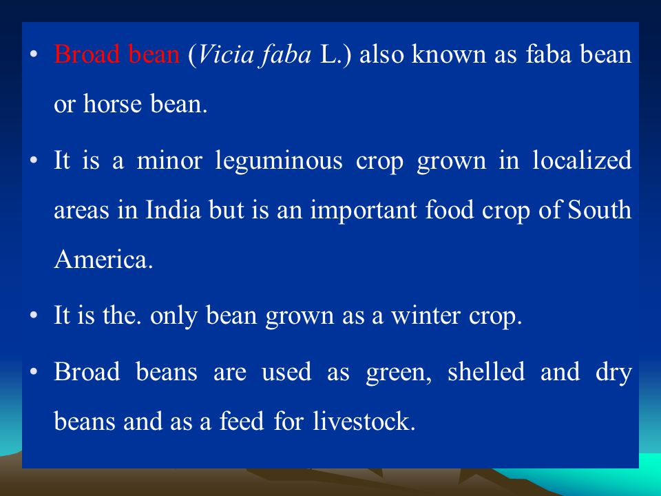 Broad bean (Vicia faba L.) also known as faba bean or horse bean. It is a minor leguminous crop grown in localized areas in India but is an important
