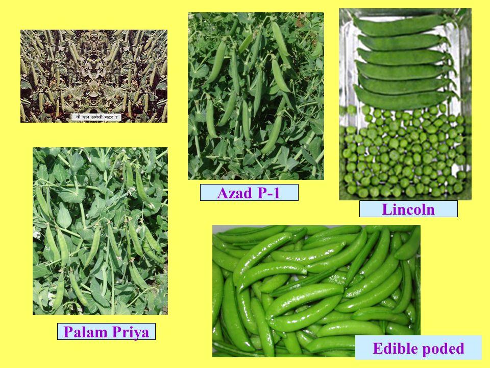 Palam Priya Azad P-1 Lincoln Edible poded