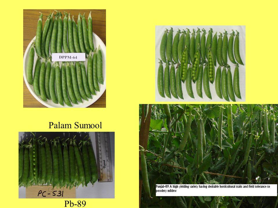 Cultivars suitable for growing in Himachal Pradesh Early Varieties Arkel Matar Ageta 6 VL Ageti Matar 7 (VL-7) Main Varieties Punjab-89 Palam Priya Lincoln Bonneville Azad P1 VL-3 Kinnauri Solan Nirog Punjab Round