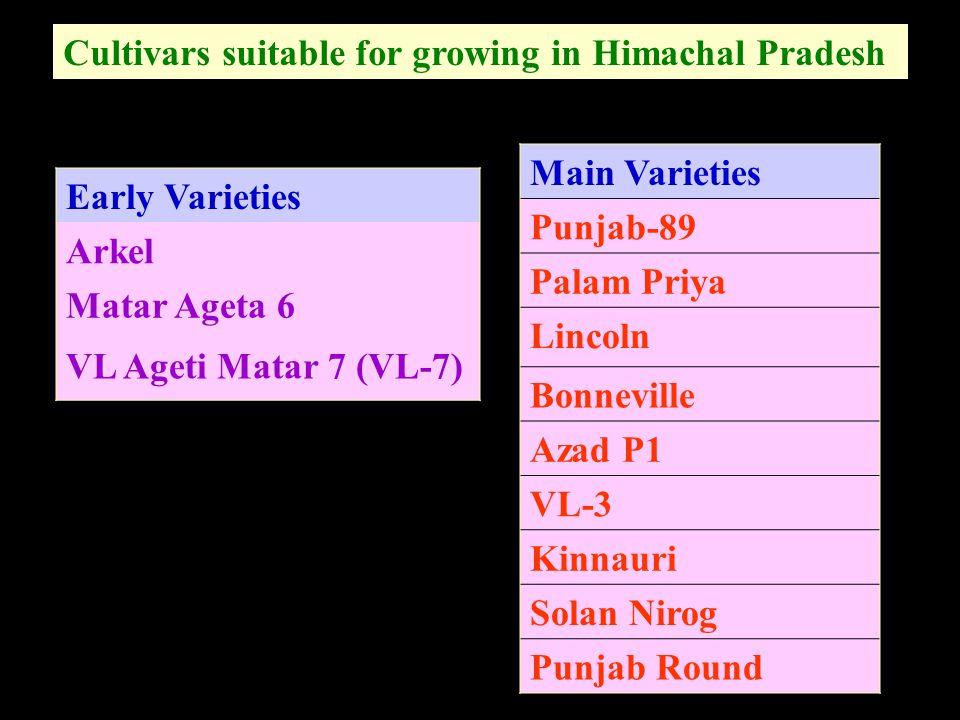 Cultivars suitable for growing in Himachal Pradesh Early Varieties Arkel Matar Ageta 6 VL Ageti Matar 7 (VL-7) Main Varieties Punjab-89 Palam Priya Li