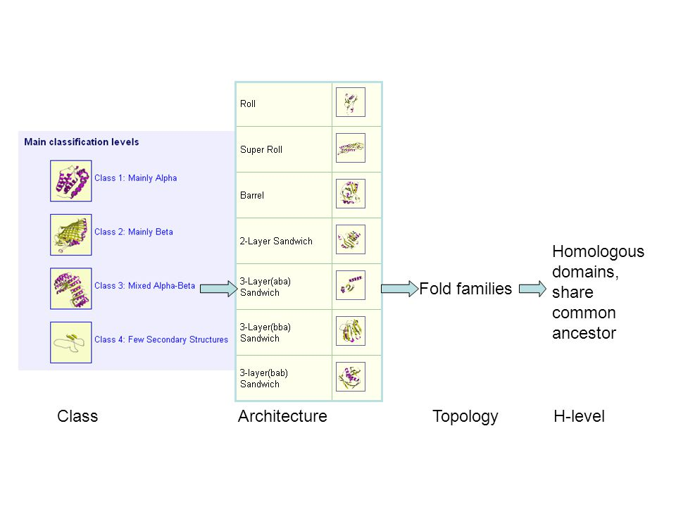Class Architecture Topology H-level Fold families Homologous domains, share common ancestor
