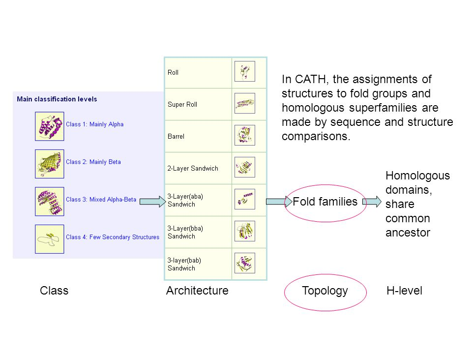 Class Architecture Topology H-level Fold families Homologous domains, share common ancestor In CATH, the assignments of structures to fold groups and homologous superfamilies are made by sequence and structure comparisons.
