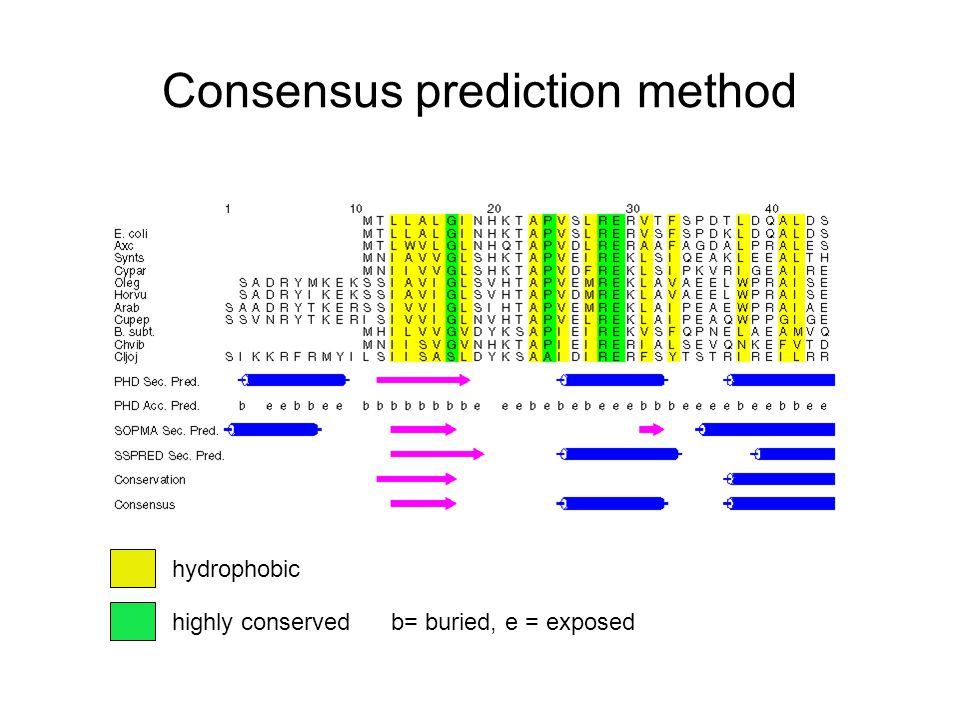 Consensus prediction method hydrophobic highly conservedb= buried, e = exposed