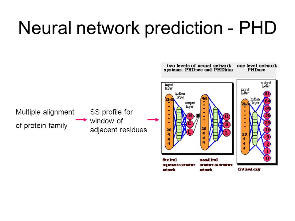 Neural network prediction - PHD Multiple alignment of protein family SS profile for window of adjacent residues
