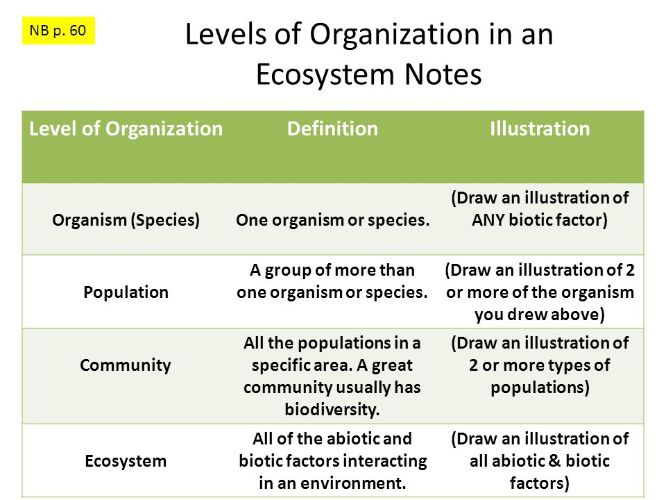 Levels of Organization in an Ecosystem Illustration Example NB p. 60