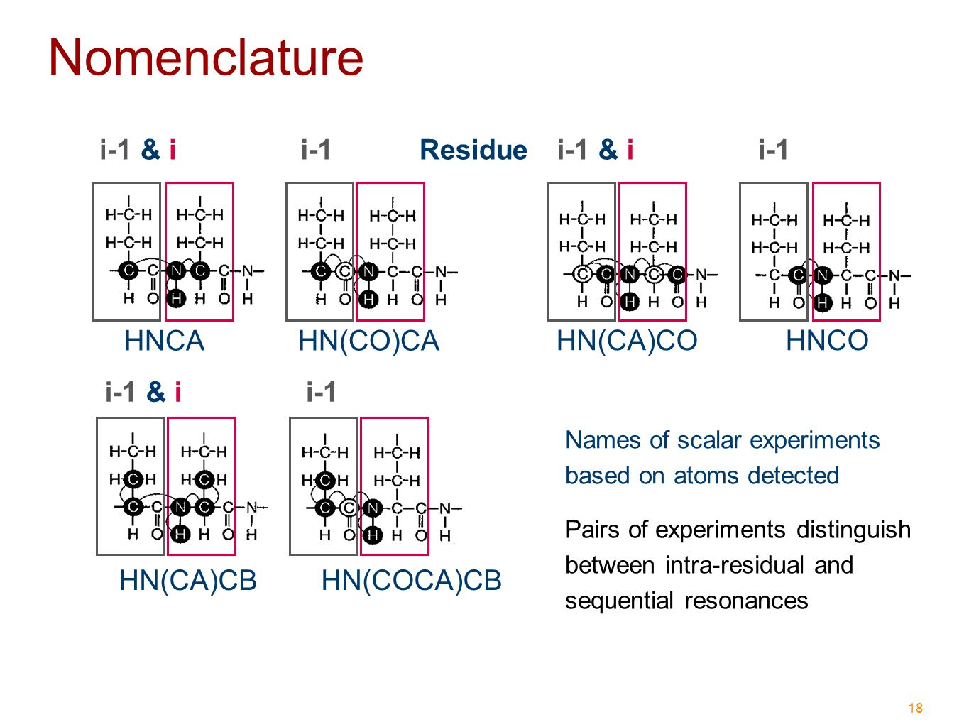 18 Nomenclature Names of scalar experiments based on atoms detected HNCA HN(CO)CA HN(CA)CO HNCO HN(CA)CB HN(COCA)CB Pairs of experiments distinguish between intra-residual and sequential resonances Residuei-1 & ii-1i-1 & ii-1 i-1 & ii-1
